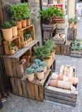 法国植物商店 库存照片