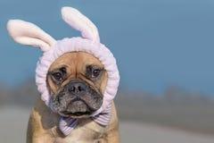 法国牛头犬狗装饰与复活节兔子服装头饰带和丝带 免版税图库摄影
