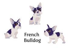 法国牛头犬用不同的姿势 皇族释放例证
