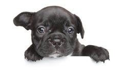 法国牛头犬小狗白色横幅 库存图片