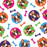 法国牛头犬样式 免版税库存照片