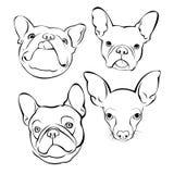 法国牛头犬背景 也corel凹道例证向量 狗,例证 皇族释放例证