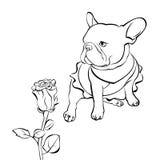 法国牛头犬背景 也corel凹道例证向量 狗,例证 图库摄影