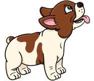 法国牛头犬 图库摄影