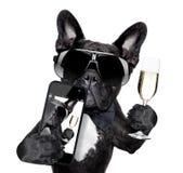 法国牛头犬selfie 免版税库存图片