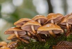 法国的蘑菇 免版税库存图片