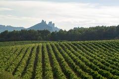法国红色AOC葡萄酒植物,葡萄酒新的收获  免版税库存照片