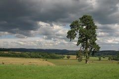 法国结构树 免版税库存图片