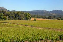 法国葡萄园,普罗旺斯 库存照片