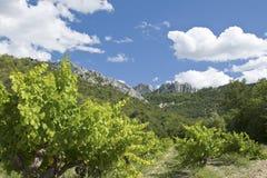 法国葡萄园 库存图片