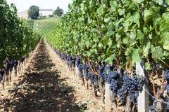 法国葡萄园 库存照片