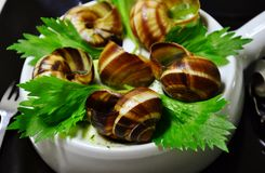 法国蜗牛 库存图片