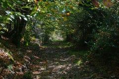 法国遮荫小径在树下在森林里 库存图片