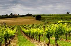 法国酒 免版税库存图片