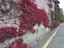 法国,卢瓦尔河流域,吉韦尔尼,克洛德・莫奈` s庭院,旅行,明亮的秋天, 10月, 免版税库存图片