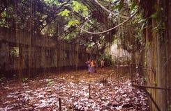 法国Guyane:在恶魔海岛上的前政治监狱在卡宴和库鲁附近 免版税库存图片