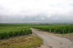 法国rainclouds葡萄园 免版税库存照片