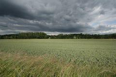 法国wheatfield 免版税库存照片