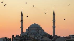 法提赫Camii征服者` s清真寺在伊斯坦布尔,土耳其 黄昏,鸟在剪影飞行 免版税库存照片