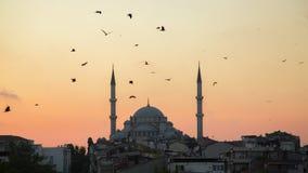 法提赫Camii征服者` s清真寺在伊斯坦布尔,土耳其 黄昏,鸟在剪影飞行 免版税库存图片