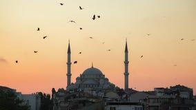法提赫Camii征服者` s清真寺在伊斯坦布尔,土耳其 黄昏,鸟在剪影飞行 图库摄影
