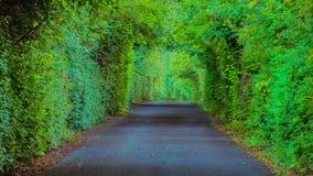 法明顿种植园树木繁茂的车道,路易斯维尔肯塔基 免版税图库摄影