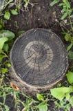 泡沫树结构JPG 库存图片