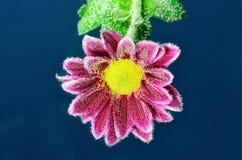 泡沫腾涌的花在与泡影的水中 免版税库存图片