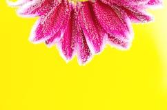 泡沫腾涌的花在与泡影的水中 图库摄影