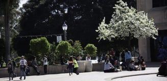 巴波亚公园 免版税库存图片