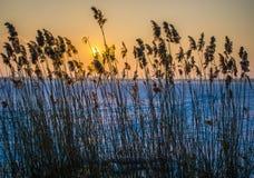 波儿地克的最近的照片芦苇海运星期日需要的时间冬天 免版税库存图片