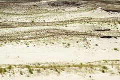 波儿地克的海岸curonian海运唾液 库存图片