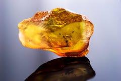波儿地克的琥珀惊人的片断与冻在它蚂蚁 免版税库存图片