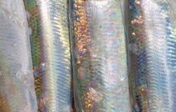 波儿地克的鲱鱼皮肤的特写镜头  库存图片