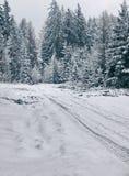 波兰冬天 库存图片