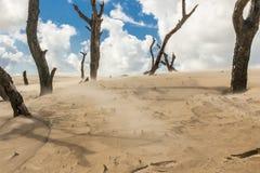 波兰沙丘- Leba。 免版税库存照片
