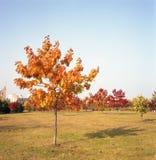 波兰秋天颜色。 图库摄影