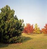 波兰秋天颜色。 库存照片