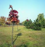 波兰秋天颜色。 免版税库存图片
