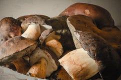 波兰蘑菇 免版税库存照片
