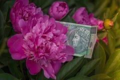 波兰金钱,一百兹罗提,在开花的花中 免版税库存图片