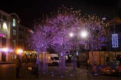 波兰,索波特- 2014年12月14日:在欢乐装饰的树在圣诞节前的街道上 免版税库存照片