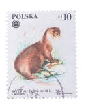 波兰-大约1984年:在展示图象打印的邮票  库存照片