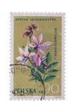 波兰-大约1962年:在展示Dictamnus打印的邮票 免版税库存图片
