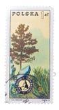 波兰-大约1975年:打印的邮票,展示杉木,徽章 免版税库存照片