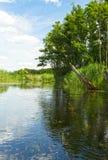 波兰 Brda河在夏天 垂直的视图 库存照片