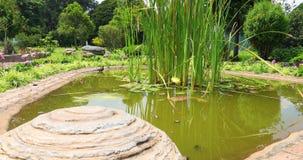 波哥大鸟在池塘 影视素材
