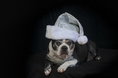 波士顿与圣诞节乔装的狗狗 免版税库存照片