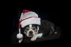 波士顿与圣诞节乔装的狗狗 免版税库存图片