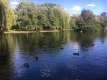 波士顿共同性湖 免版税库存照片